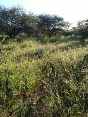Bujna wegetacja w Kambaku