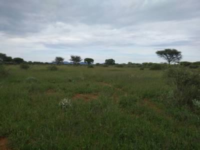 Zielone otwarte przestrzenie Kambaku w lutym
