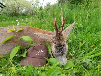 Wraz z otwarciem granic możliwe staną się komercyjne polowania na kozły