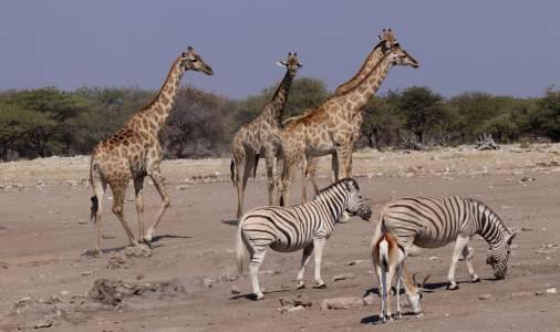 Bogactwo Parku Narodowego Etosha