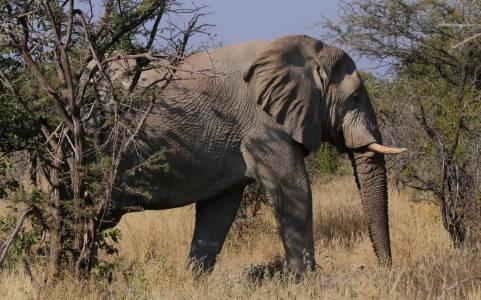 Portret słonia – park narodowy Etosha