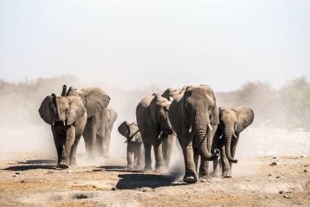 Stado słoni w Parku Narodowym Etosha. Fot. Anna/Adobe Stock