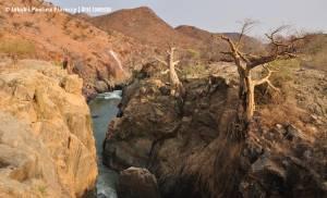 Baobaby wyrastające ze skał