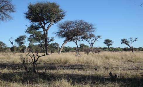Bogata sawanna drzewiasta – siedlisko antylopowców szablorogich