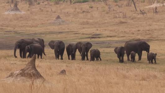 Słonie w Zimbabwe