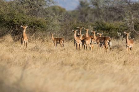 Pierwsze polowania komercyjne po lockdownie i sytuacja w Afryce
