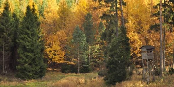 Gorzka jesień