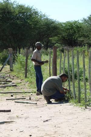 Renowacja ogrodzenia w Kambaku