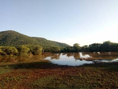 Półnaturalny wodopój wypełniony po ulewie