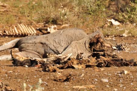 Przykra konsekwencja suszy