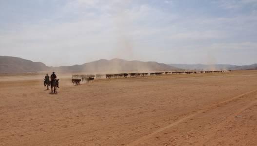 Ucierpią też hodowcy bydła...