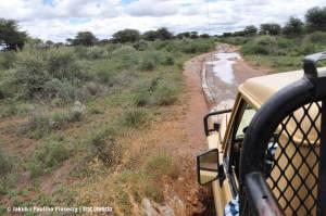 Błoto w namibijskim buszu
