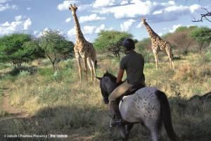 Bliskie spotkanie z żyrafami
