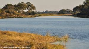 Delta rzeki Kwando