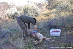 Pozorowanie miejsca polowania