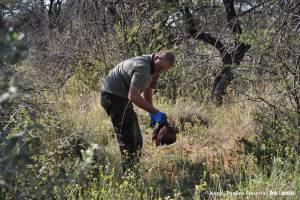 Znaczenie traw treścią żołądkową