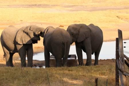 Słonie przy wodopoju ze świeżą wodą