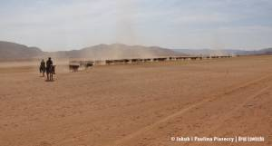 Zganianie bydła