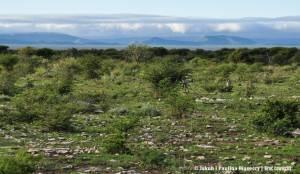 Zielona Namibia
